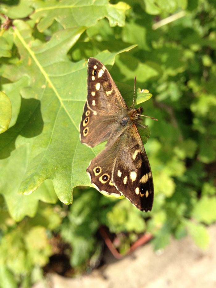 "speckled wood butterfly for...             <a class=""readmore"" href=""/blog/animating-still-photograph-after-effects/"">Read more →</a>           </div>          </li>                <li class=""post"">           <h3><a href=""/blog/skylights-15-instagram-style-filters-after-effects/"">Skylights: 15 Instagram style filters for After Effects</a></h3>           <div class=""content excerpt"">             <p><img src="